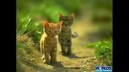 Най - сладките животни на планетата