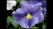 Шепота На Цветята...pелакс