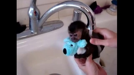 Малка маймунка взема душ под чешмата