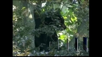 Свалиха 110-килограмова мечка от дърво в частен дом в Ню Джърси