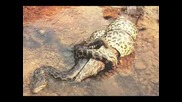 Змии срещу крокодили