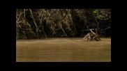 Смъртоностният лов на ягуара