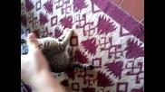 Котка vs Ръка. Моята котка :d