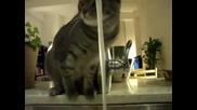 Котка пие много странно вода