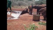 Сладко бебе слонче в битка за да излезе от водата !