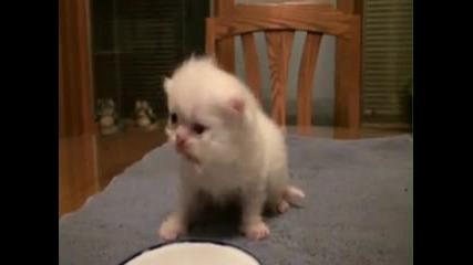 Сладко бебе котенце което яде и мяука :)
