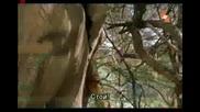 Слон с разстройство Много Смях