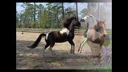 Enya - Wild Child     Horses