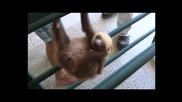 Това животно Ленивеца е голяма щуротия хахаха