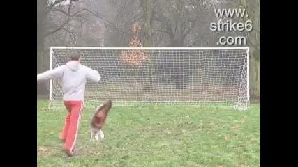 Никога не ритай куче