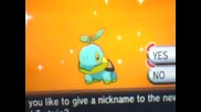Shiny Turtwig 301 eggs