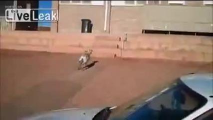 Много умна коза пази колата на стопанина си !!! Смях