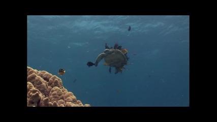 Документален филм за Mорска Kостенурка