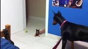 Вижте този как се изгаври със кучето си !