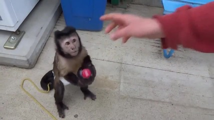 Малка сладка Маймунка иска да си закупи безалкохолно от Автомат