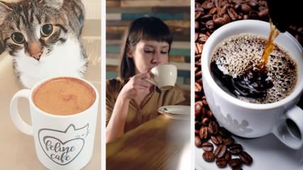 Топ 5 Любопитни факти за кафето които не знаете