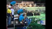 Аквариумът Sea Life в Сидни отвори врати след мащабен ремонт