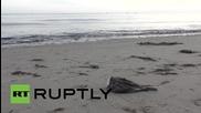 Десетки хиляди литри петрол се изсипаха в океана след спукването на петролопровод в САЩ