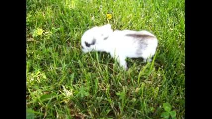 Първите самостоятелни стъпки на пухкавото ми зайче :)