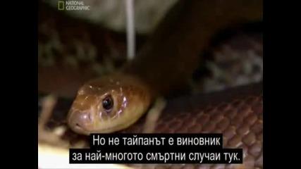 Най - смъртоноснити животни в Австралия - змии
