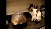 Котка се страхува от пуканки