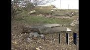 Едно дете е с опасност за живота след взрива в пловдивското село Тюркмен