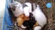 котка гледа малките си и малки пиленца