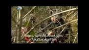 Arka Sokaklar 226 bolum ( Али и Ръза в гората )