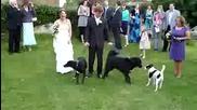Куче напика роклята на младоженката!!
