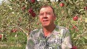 Spain: Patriotic apples 'tattooed' with fruity 'Estelada' flags
