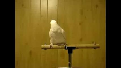 ptica dancing na pesen :d:d:d