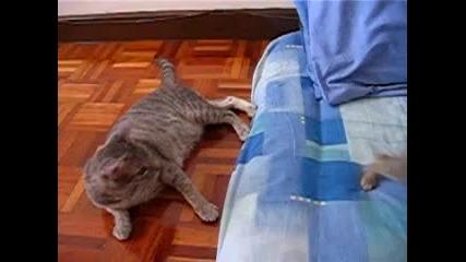 Коте играе с опашката на майка си