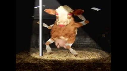 Milko - Luda krava (parodiq)