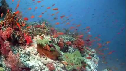 Кораловият Риф - Неописуема красота
