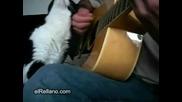 Ето Как Едновременно Да Свирите На Китара И Да Галите Котката Си