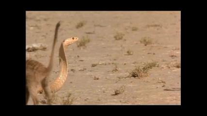 Животът на всички видове змии част 4