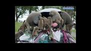 babuini banditi napadat avtomobil
