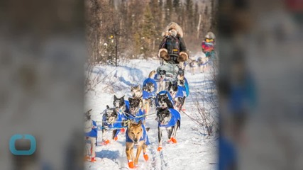 A Blind Dog is Competing in the Iditarod With the Rest of Her Family