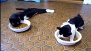 Котки, които тъкмо излизат от упойка