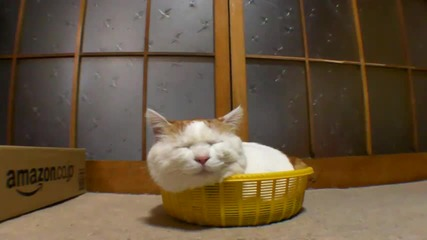 I don't care cat