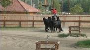 Виртуозна езда - Унгария