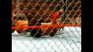 Jeff Hardy Полита От Клетка Върху Umaga