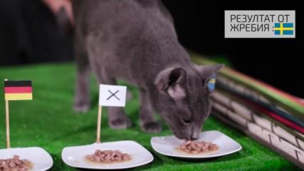 Ще вземе ли Белгия победата? ВИЖ резултата според котето ВладИмир!