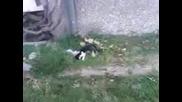 Дете удря коте