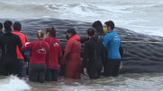 Argentina: Rescue attempts futile after whale washes up on Santa Clara del Mar coast