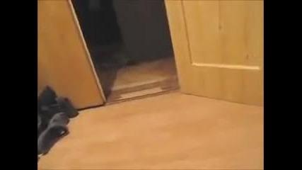 Луд смях! Котките на Кен Блок !