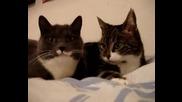 Две Дърдорещи Котета