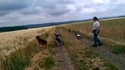 Парализирани кучета се забавляват
