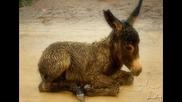 Bob Moore - Little Donkey