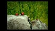 Love Story - Minuscule